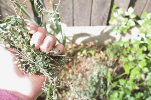 thyme in hand