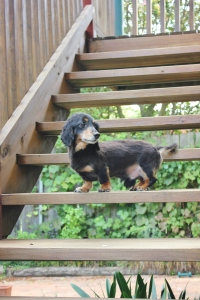 norman on stairs